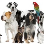 Tierversicherungen für Katzen, Hunde, Pferde