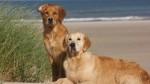 Tierversicherungen im Urlaub