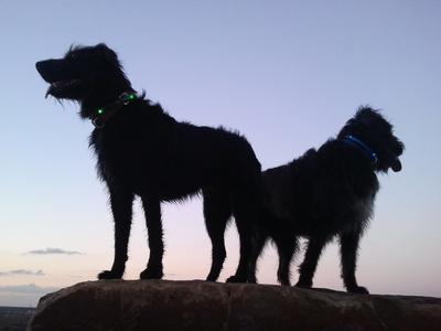 Hundekrankenversicherung Pro und Contra
