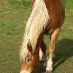 Pferde-Op Versicherung für ältere Pferde