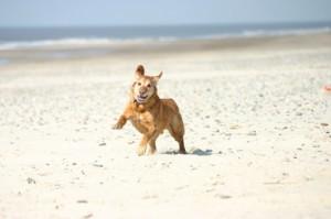 Hundefeindliche Gesetze in Dänemark