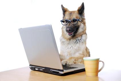 hunde erfolgreich ausstellen