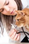 Katzenkrankenversicherung