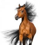 Pferdekrankenversicherung sinnvoll?