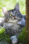 Kastrationspflicht für Katzen